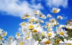 обои весна