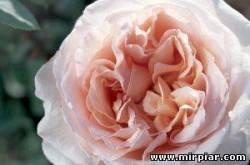 живые цветы оптом