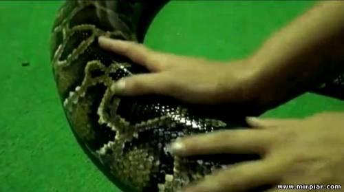 Новый год 2013 год Змеи