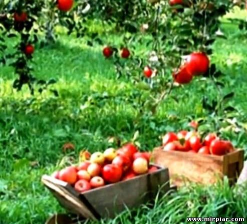 музыка фрукты