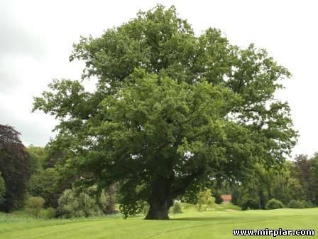 дерево дом