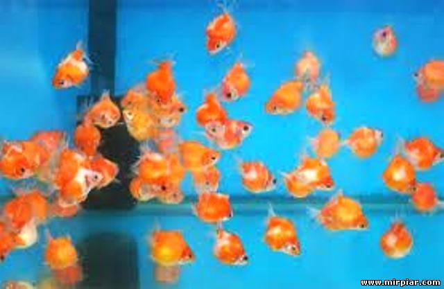 картинки маленьких рыбок для детей