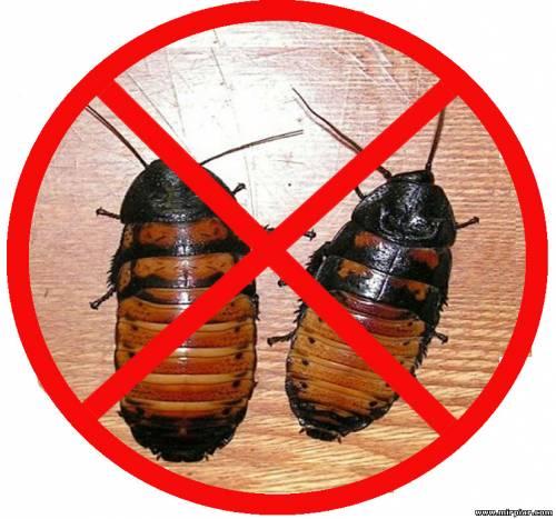 от тараканов для дома