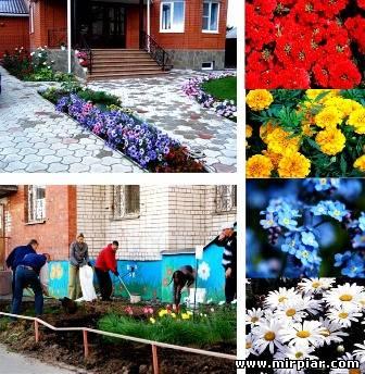 цветы рядом с домом