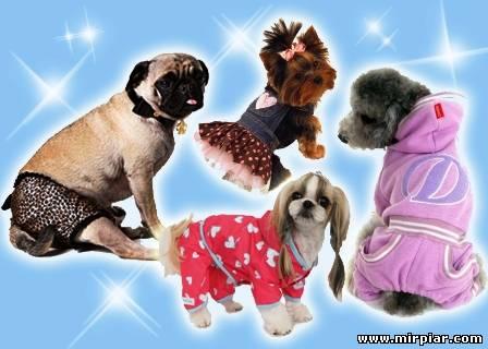модные домашние животные