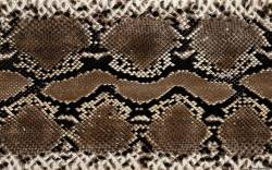 Новогодняя маска змеи