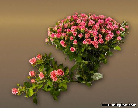 цветы, стабилизированные розы