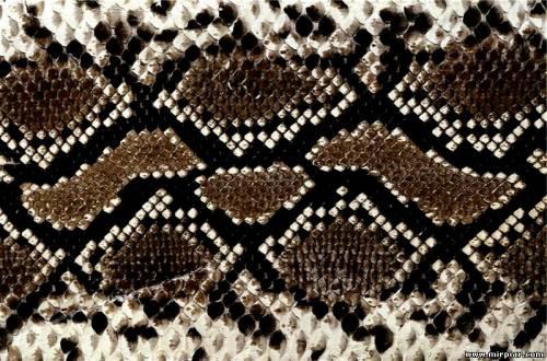 Новогодняя маска змеи выкройка 1