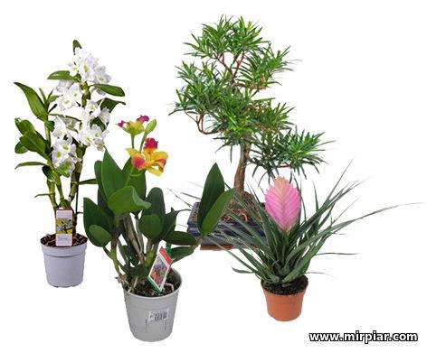 цветы учителю на 1 сентября