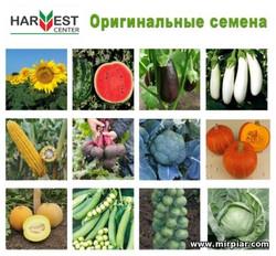 купить сортовые семена в Украине