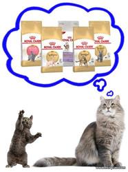 сухой корм для кошек Royal Canin отзывы