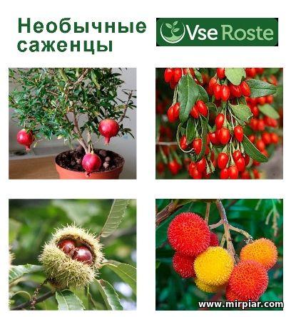 купить саженцы экзотических растений