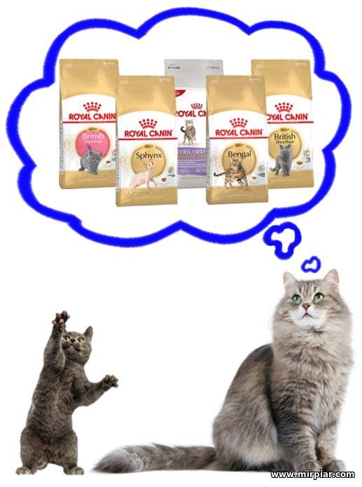 Купить Дряпка Кошка лежак Природа (53см х 39см х 39см) в